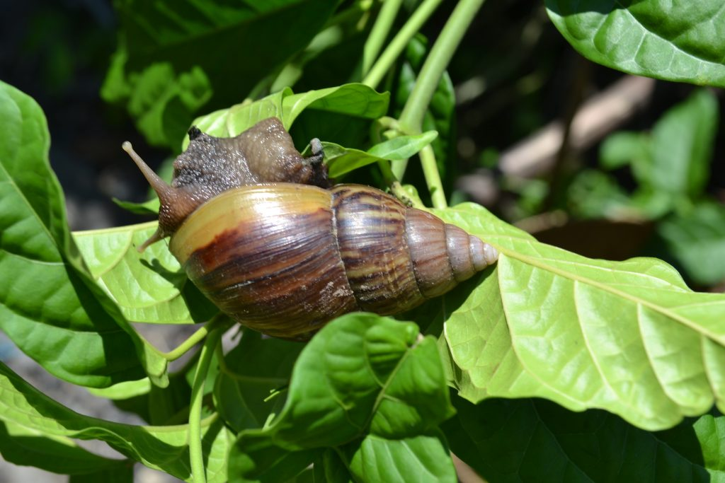 Cute snail on leaf
