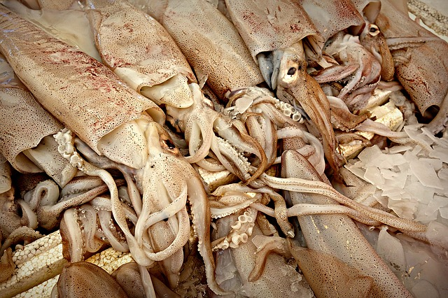 Squid in a market